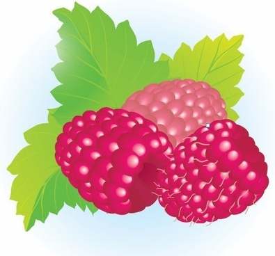 Free Raspberries Vector Illustration