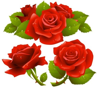 free rose flower vector