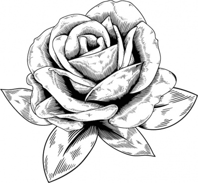 Rose Buke Free Vector Download 1 078 Free Vector For Commercial