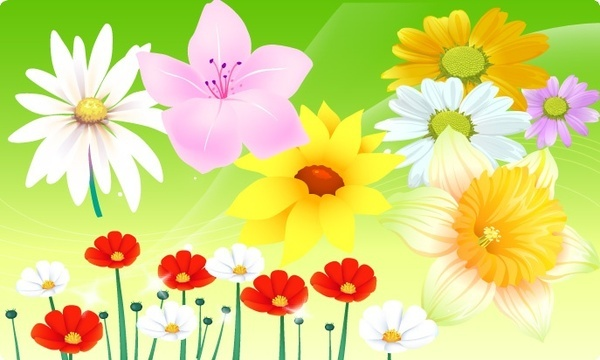 floral backdrop various colorful flowers design