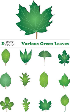 free vector green leaves collection