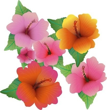 Hibiscus Flower Template Free Vector Download 26458 Free Vector