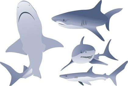 white shark icons collection various posture styles