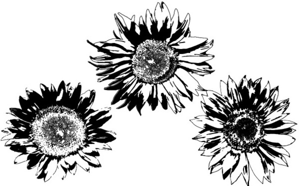 Sunflower Eps Free Vector Download 192 559 Free Vector For Commercial Use Format Ai Eps Cdr Svg Vector Illustration Graphic Art Design Sort By Unpopular First