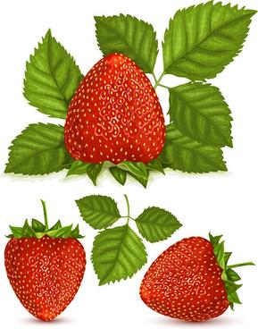 fresh berry vector