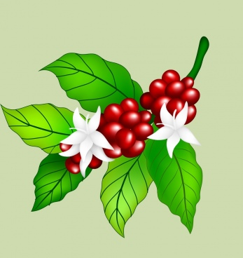 fresh coffee beans flowers icon colorful shiny design