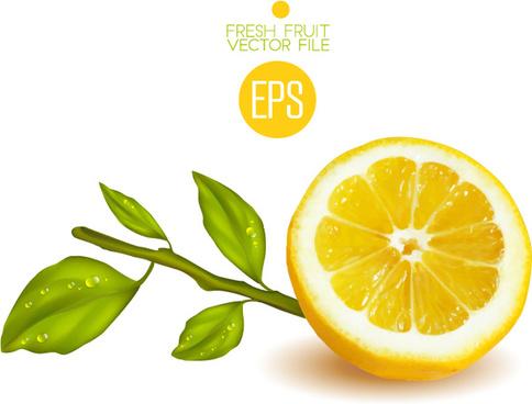 fresh cut lemon design vector