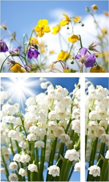 fresh flower series 01 hd picture