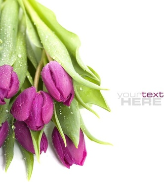 fresh flowers background hd photo 3