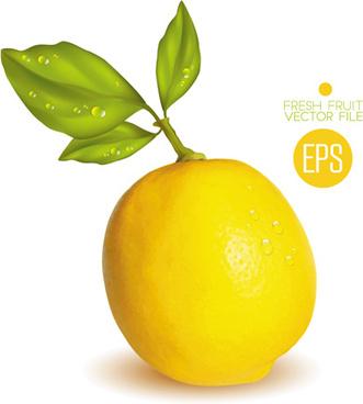 fresh fruit citrus vector set