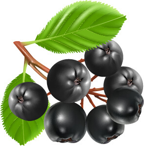 fresh juicy berries vector