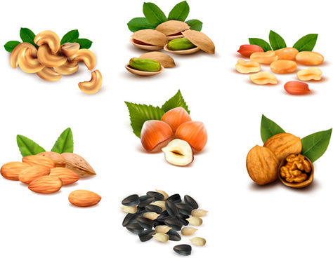fresh nuts shiny vector