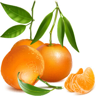 fresh orange and green leaves vector