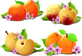 fresh pear and peach vector