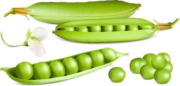 fresh peas vector graphics