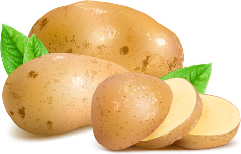 fresh potatoes and sliced vector