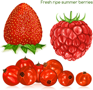 fresh ripe summer berries shiny vector