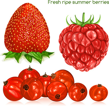 fresh ripe summer berries vector