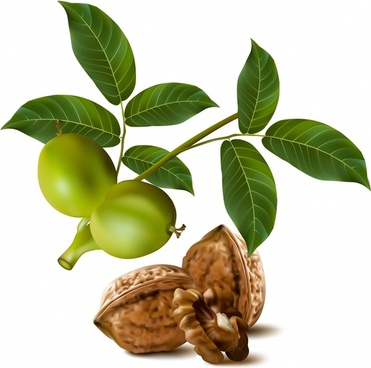 fresh plants icon olive walnut sketch modern realistic