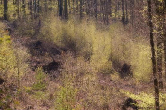 frhlingswald spring forest