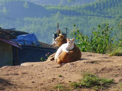 friendship cat dog