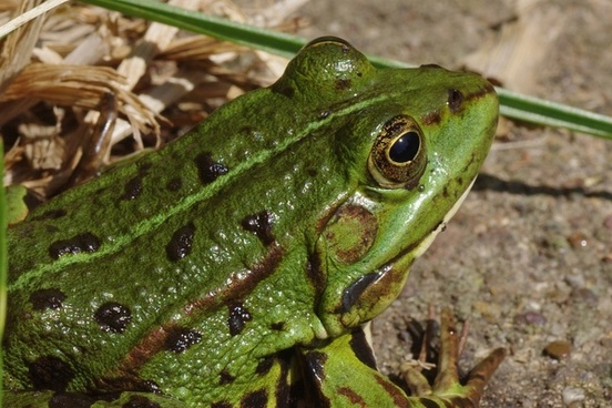 frog frog pond amphibian