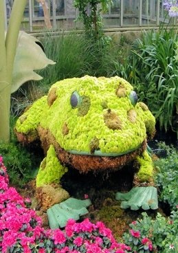 frog in botanical garden