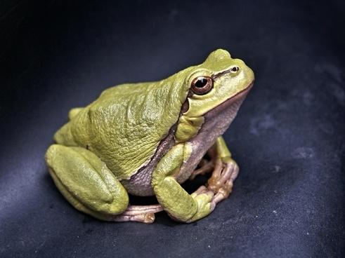 frog macro amphibian