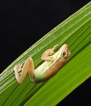 frog macro close-up