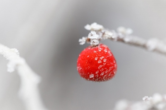 frosty red berry