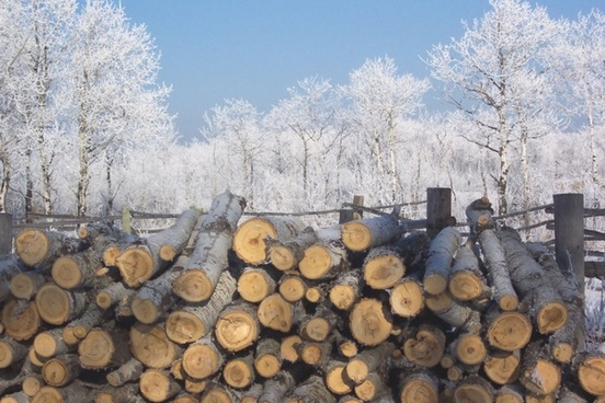 frosty woodpile