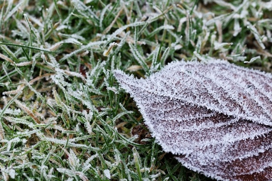 frozen leaf on grass