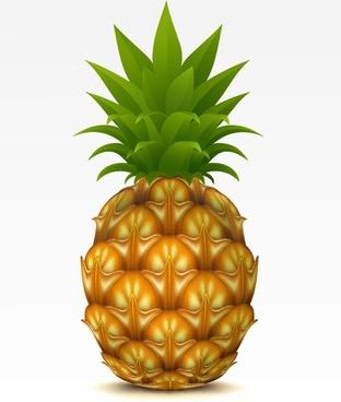 fruit 01 vector