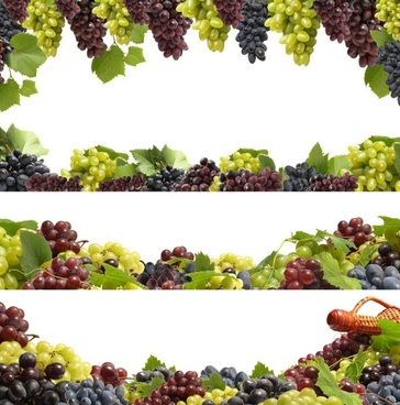 fruit borders 02 hd pictures