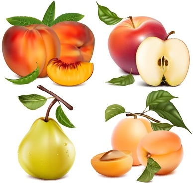 fruit pictures 02 vector