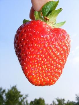 fruit red blue sky