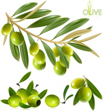 olive fruits background shiny green modern design