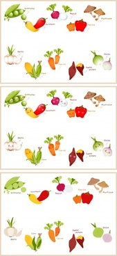 vegetables educational banner templates colorful flat symbols design