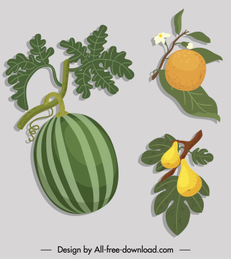 fruits icons colored classic sketch