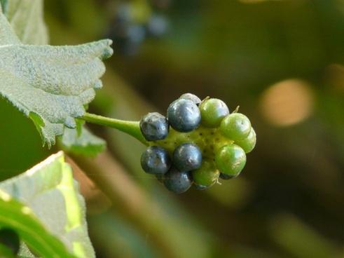 fruits little samig toxic