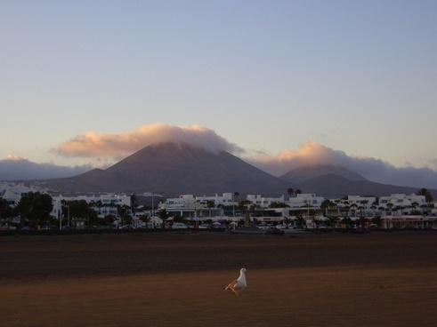 fuertaventura spanien  insel beach