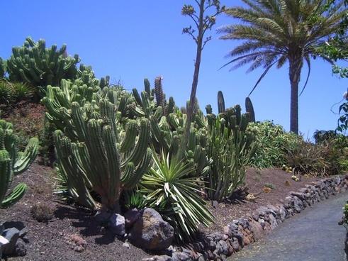 fuerteventura green plant