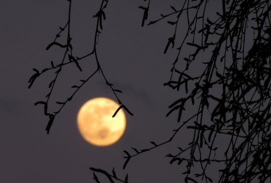 full moon moon birch