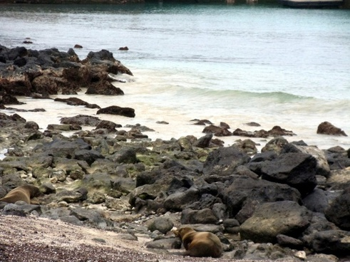 galapagos sea lion beach