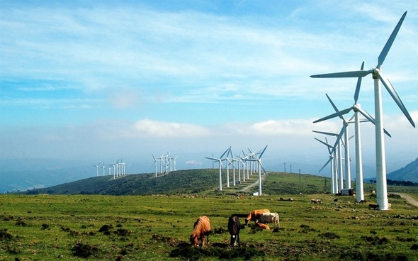 galicia windmills cows