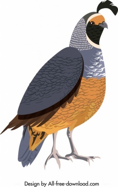 galliformes icon bird sketch colored closeup design