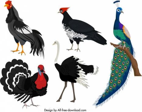 galliformes icons chicken turkey peafowl ostrich sketch