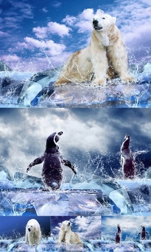 galloping glaciers and polar bears and penguins highdefinition picture