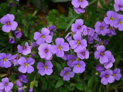 garden blue cushions blue pillow flower