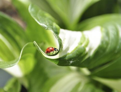 garden bug oil critter